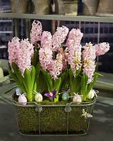 spring bulb arrangement martha stewart