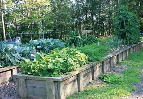 Garden-boxes-300x207 in Planter Box Garden and uncategorized