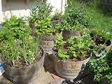 More wine barrel planter gardens. | Plants and Flower Ideas ...