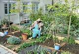 small home vegetable garden ideas garden design