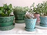 For a floor-to-ceiling indoor garden effect, try placing succulent ...