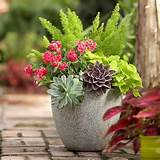 Potted succulent and fern | Outdoor Living | Pinterest