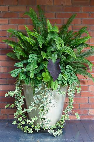 Shade Container Gardening Ideas