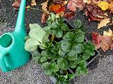 school gardening club october and november ideas