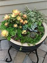 Succulent Container | Creative garden ideas | Pinterest