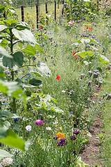 Bloemen border | Vegetable Garden | Pinterest