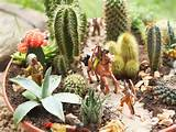 Succulent Container Garden : HGTV Gardens