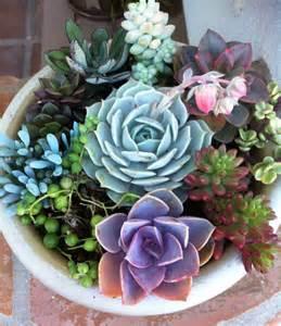 Succulent Plant. DIY Dish Garden Plants. by SucculentOasis