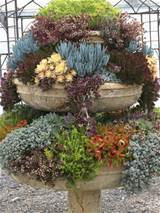 35 indoor and outdoor succulent garden ideas photo 5