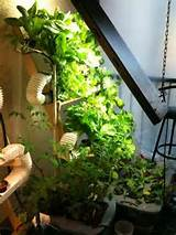 ... by Canadian Wholesale Hydroponics on DIY Hydroponic and Aquaponic