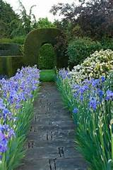 iris walkway flowers and gardening pinterest
