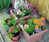 container gardening ideas – doug greens garden
