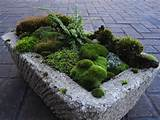 your Moss Rocks! online today. Moss is grand. Moss is green. Moss ...