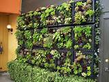 Contemporary Vertical Garden Ideas - Modern Home Decorating Ideas