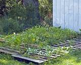 Refresh Your Eyes And Mind With Pallet Vegetable Garden | 101 Pallets