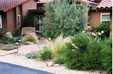 Low water garden from Houzz.com | Garden Ideas | Pinterest