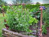 Funky Junk Interiors: More tips and junk in the garden