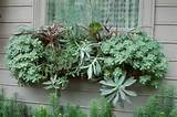 Cool home decorating ideas with Succulents for outdoor use