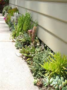 succulent garden ideas side of house