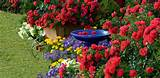flower garden ideas for beginners