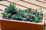 35 Indoor And Outdoor Succulent Garden Ideas
