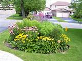Perennials, Annuals & Veggies: Tips, Tricks & Pix cubit: Perennials ...