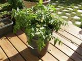container vegetable gardening ideas search pictures photos