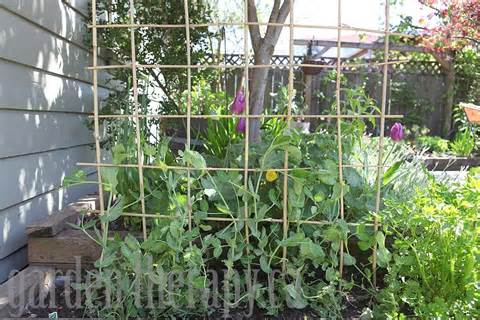 how to build pea trellis download how build pyramid trellis