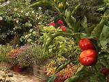 edible gardening in small spaces outdoors home garden television