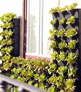 Mini Vertical Garden for Balcony, Patio, or Kitchen - Urban Gardens