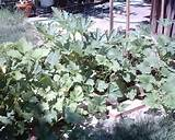 weed free garden in a weed filled lawn garden pinterest