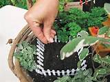 Gardens: Design and create miniature fairy gardens, dish gardens ...