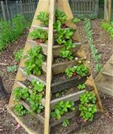 Great space saving design. Popular idea for square foot gardeners ...