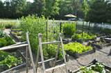 Planning Ideas for Your Vegetable Garden with Amy Stafford from www ...