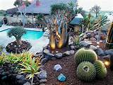 innovative lighting namib garden cactus nursery garden design