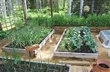 raised bed garden with automatic watering system