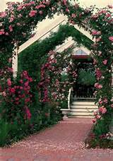 Texas antique rose garden | garden and potting shed ideas | Pinterest