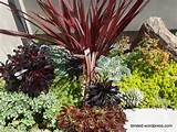 succulent garden ideas mixed succulent beds in a modern garden