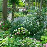 Shade areas | Garden Ideas | Pinterest