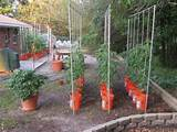 Gardens Ideas, Vertical Gardens Pumpkin, Creative Gardens, Gardens Dig ...