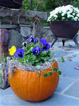 purple pumpkin pansies garden ideas pinterest