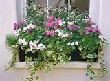 Window box | Garden ideas | Pinterest