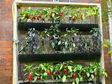 vertical gardening idea