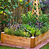 Square-Foot Gardening: Minimal Space, Maximum Results