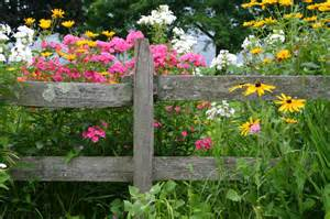 rustic fence with weather damage and a bright array of wild flowers ...