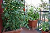 Apartment Balcony Vegetable Garden Decorating Ideas