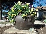 pansy pot community garden ideas pinterest