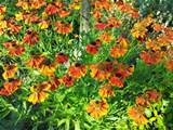 summer flowers in washington state flowers gardens pinterest