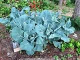 10 pallet gardening ideas pallets designs