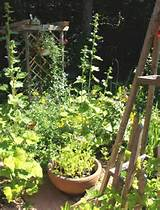 Cottage garden. | GARDEN IDEAS | Pinterest
